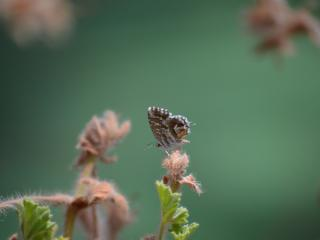 butterfly, insect, plant wallpaper