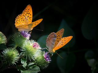 HD Wallpaper | Background Image butterfly, wings, flower