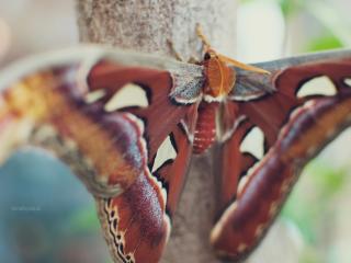 butterfly, wings, spots wallpaper