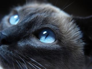 Cat Eyes Closeup wallpaper