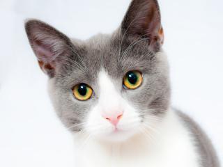 cat, face, beautiful wallpaper