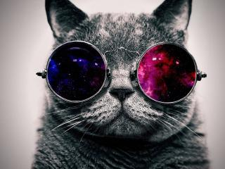 cat, face, glasses wallpaper