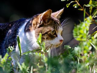 cat, grass, view wallpaper