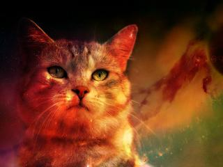 Cat In Space Digital Art Planet wallpaper