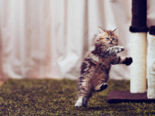 Cat Jumping Portrait wallpaper