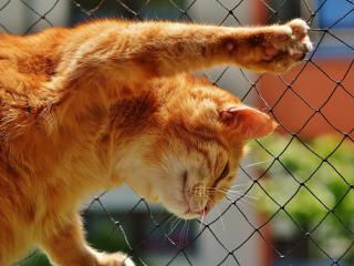 cat, red, mesh wallpaper
