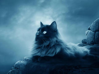 Cat Sitting On Rock Stone Dramatic wallpaper