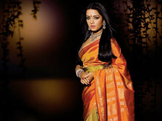 Celina Jaitley In Saree HD Wallpaper wallpaper