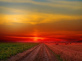 Colorful Sunset at Lonely Field wallpaper