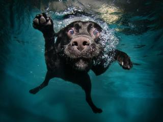 dog, black, underwater wallpaper