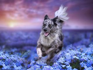 Dog Depth Of Field Effect wallpaper