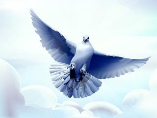 dove, bird, flying wallpaper