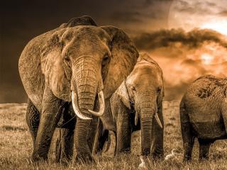 Elephant 4k Photography wallpaper
