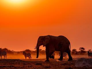 Elephant 4k Wildlife Photography wallpaper