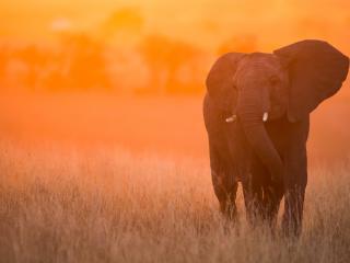 Elephant In Sunset Kenya Africa wallpaper