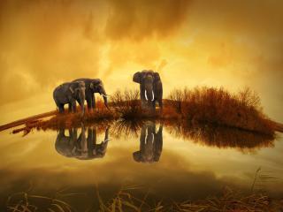 Elephants Wildlife River Thailand wallpaper