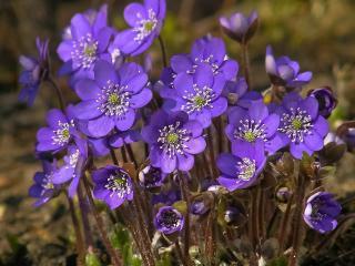 field, flowers, bloom wallpaper