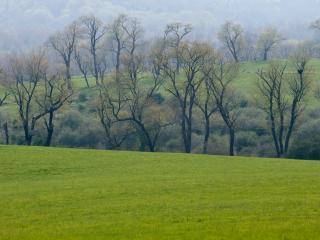 field, grass, trees wallpaper