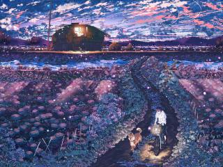 field, night, anime wallpaper