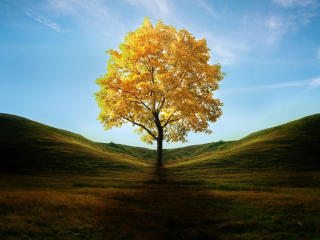 Field with Lone Tree in Autumn wallpaper