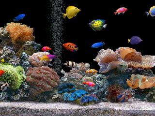 fish, underwater, colorful wallpaper