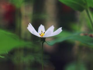 HD Wallpaper | Background Image flower, bloom, plant