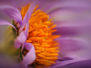 flower, bud, pollen wallpaper
