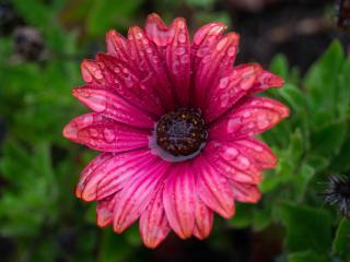 flower, bud, water wallpaper