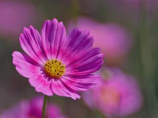 flower, field, plant wallpaper
