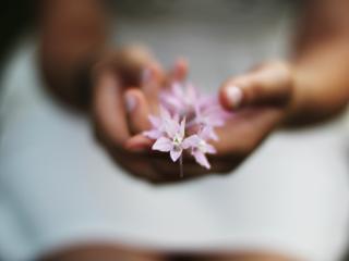 flower, hands, blurring wallpaper