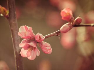 flower, spring, bloom wallpaper