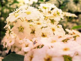 flowers, bloom, plant wallpaper