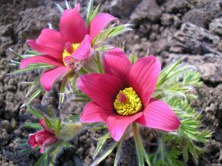 flowers, close-up, pollen wallpaper