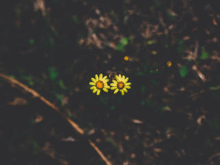 flowers, couple, stem wallpaper