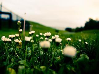 flowers, grass, close-up wallpaper