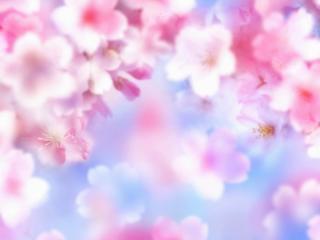 flowers, petals, pink wallpaper