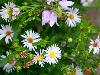 flowers, plants, grass wallpaper