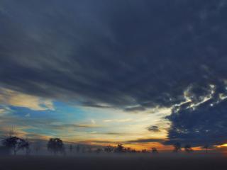 fog, trees, sky wallpaper