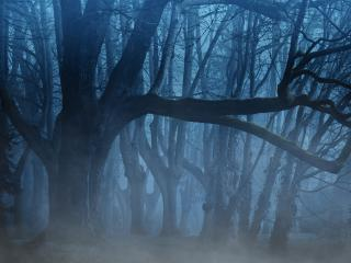 Fogy Forest Trees wallpaper