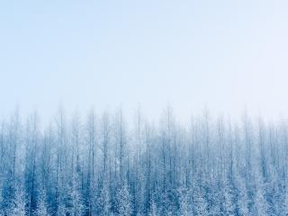 Fogy Forest Winter Day wallpaper