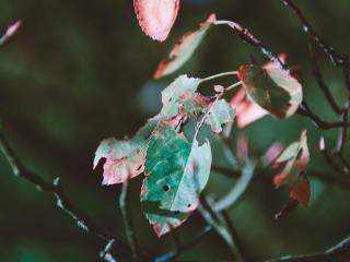 foliage, autumn, dry wallpaper