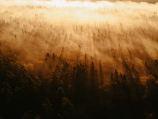 Forest 4k Amazing HD wallpaper