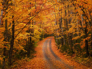 Forest Beautiful Path wallpaper