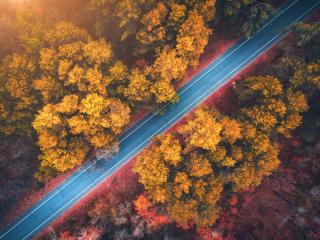 Forest Road Photography Aerial 4k wallpaper