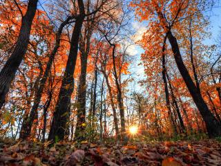 forest, trees, light wallpaper