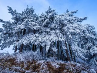 Frost Trees in Winter Snow 4K wallpaper