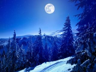 Full Moon Over Winter Forest wallpaper