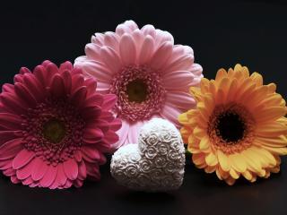 gerbera, flower, heart wallpaper