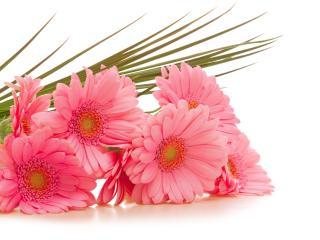 gerbera, flowers, bouquet wallpaper