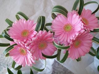 gerbera, flowers, decor wallpaper